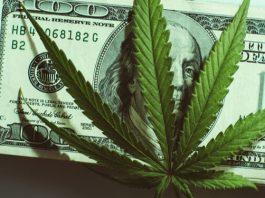 Cannabis Business Social Network newscase.com