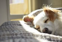 What do dogs dream about?